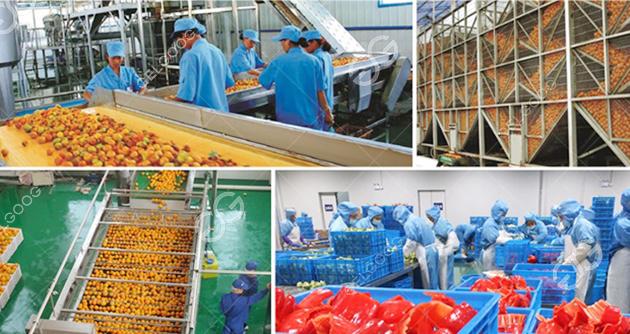 Citrus Juice Processing Line