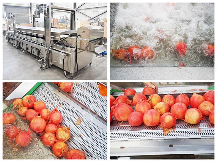 tomato blanching machine details
